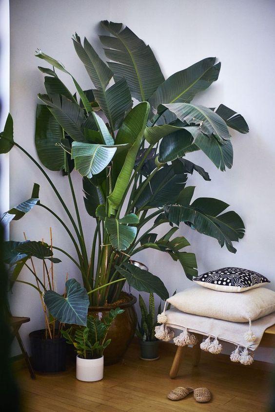 Фруктовый сад в городской квартире: 7 красивых идей
