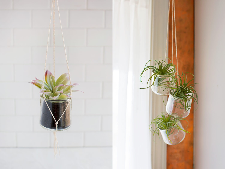 Home sweet home: мини-оранжерея своими руками