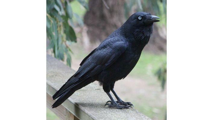 Тесты по картинкам ворона