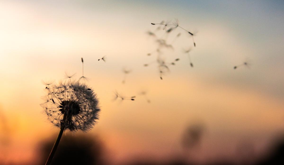 Ценность саморазвития: Что происходит, когда мы саморазвиваемся?